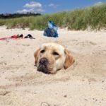 zakopanej pes